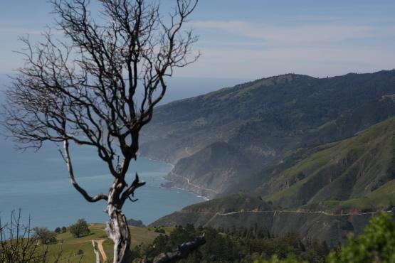 Pacific ocean coastline in California Big Sur with fog, mist, green hills, tree, and coast highway.
